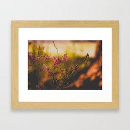 Orange Light Framed Art Print