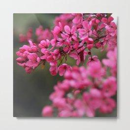 Crap Apple Blossoms Metal Print