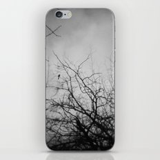 Branches and Bird iPhone & iPod Skin
