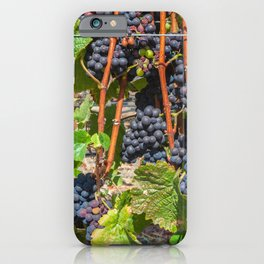 Grapevines 3 iPhone Case
