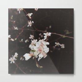 Cherry Metal Print