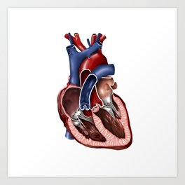 Cross section of human heart. Art Print
