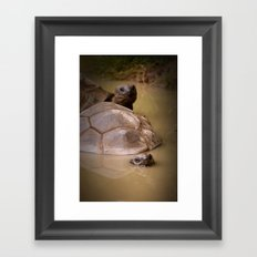 Two Turtle Buddies Framed Art Print