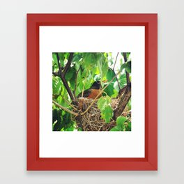 Bird Nest Framed Art Print