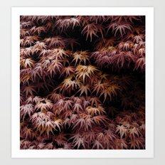 Japanese Maple, Acer Palmatum Seigen Art Print
