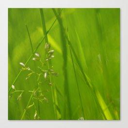 Grass space Canvas Print
