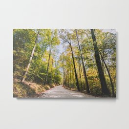 Forest Road - Muir Valley, Kentucky Metal Print