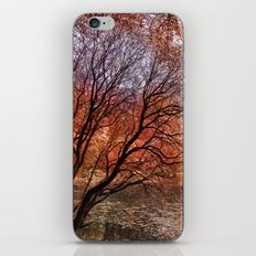 Mad colors of Autumn iPhone & iPod Skin