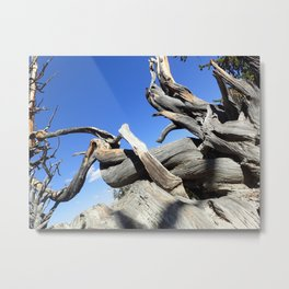 Trees and sky Metal Print