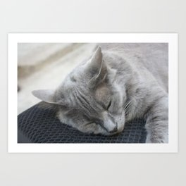 Beautiful Grey Cat Sleeping Art Print