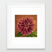 dahlia Framed Art Prints featuring Dahlia  by maggs326