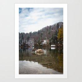 Beautiful scene of swan (lat. Cygnus olor) on the lake Art Print