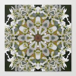 Lacy Serviceberry kaleidoscope - Amelanchier 0033 k5 Canvas Print