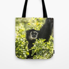 Black monkey Tote Bag