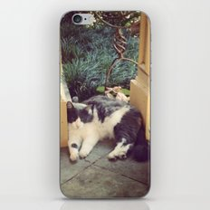Chillin' iPhone & iPod Skin