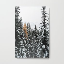 353. Autumn Pine in Snow Forest, Banff, Canada Metal Print