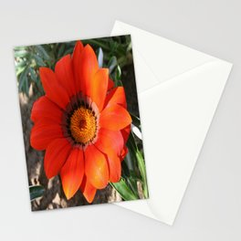 Close Up of a Beautiful Terracotta Gazania Flower Stationery Cards