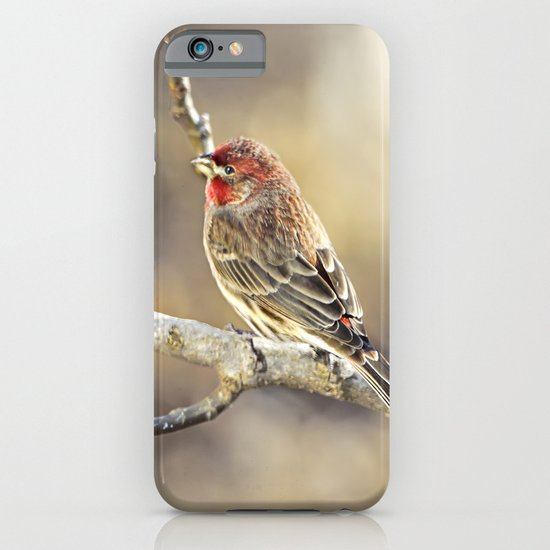 Rosy Little Finch iPhone & iPod Case