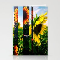 maryland Stationery Cards featuring Sunflowers in Maryland by kpatron