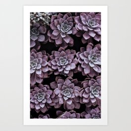 Soco garden Art Print