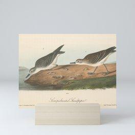 Vintage Print - Birds of America (1840) - Semipalmated Sandpiper Mini Art Print
