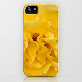 Blooming Mellow Yellow Floribunda rose in the garden iPhone Case
