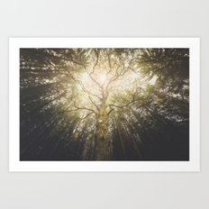 I found a tree in the forest Art Print