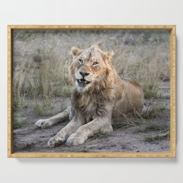 Male African Lion Serving Tray