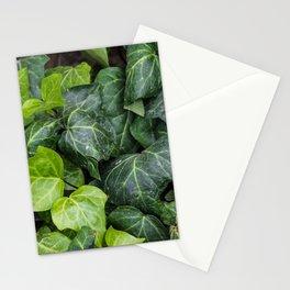 Mediterranean Ivy Stationery Cards