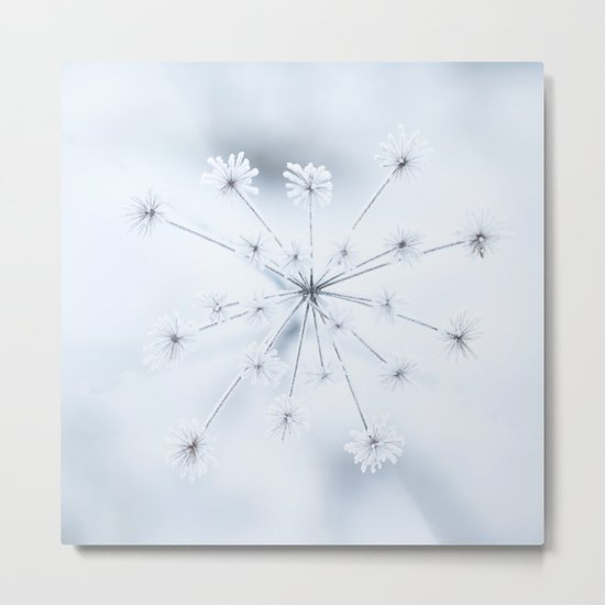 Beautiful Dry Flower with Ice Crystals #decor #buyart #society6 Metal Print