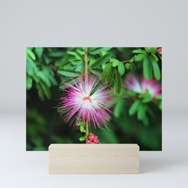 Flower photography by Uthpala Shyamendra Mini Art Print