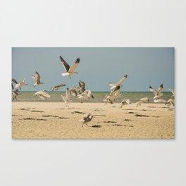 Chaos des oiseaux Canvas Print
