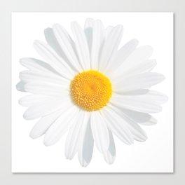 chamomile daisy Canvas Print