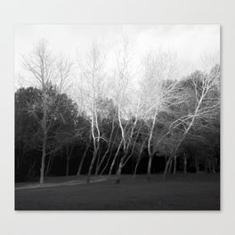 black and white grove of woods Canvas Print