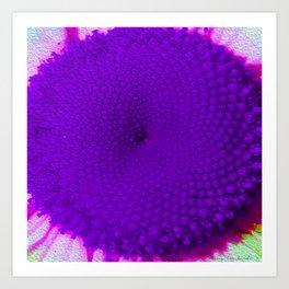 Purple Vineyard Daisy Art Print