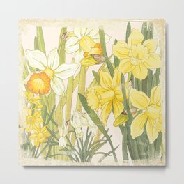 Vintage Floral Paper:  Spring Flowers on Shabby White -Daffodils Metal Print