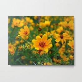Beggartick Flowers Yellow Daisy Spring Wildflowers Metal Print