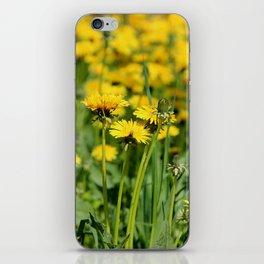 Die Löwenschar iPhone Skin