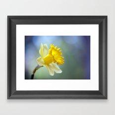 Daffodil 9909  Framed Art Print