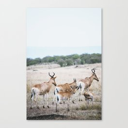 Just relaxing Canvas Print