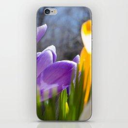 Field of Crocuses iPhone Skin