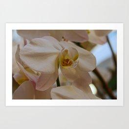 White Peabody Orchid II Art Print