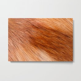 Red fox hairy fur texture cloth Metal Print