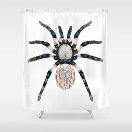 Desert Toned Spider Shower Curtain
