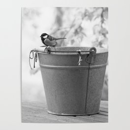 Songbird (Great Tit) on Autumn Day Black and White #decor #society6 #buyart Poster
