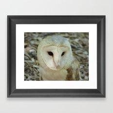 owl 2016 Framed Art Print