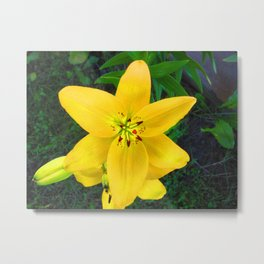Sunny Side of a Flower Metal Print