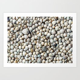 Seashells in the Regional Natural Park of Camargue Art Print