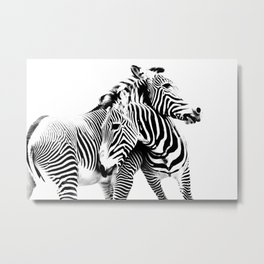 Grevy's Zebras Metal Print