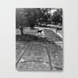 Stray Dog - Apopka Florida Metal Print